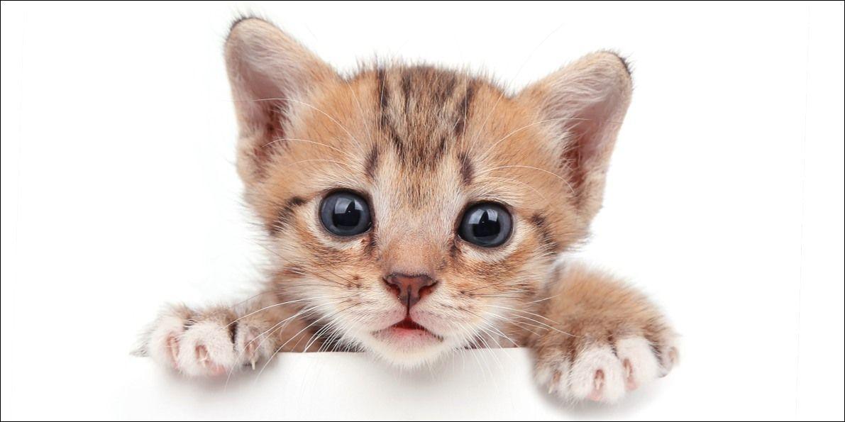 Osuška Kitten white 70x140 cm