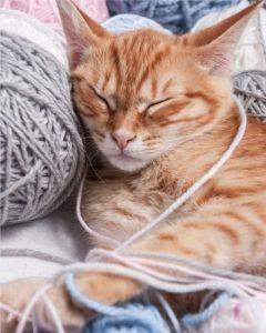Mikroflanelová dětská deka Kočka klubíčko