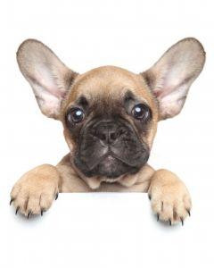 Mikroflanelová dětská deka Puppy bulldog
