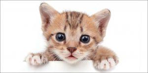 Obrázek kočičky na kvalitní dětské bavlněné plážové osušce Kitten white, Jerry Fabrics