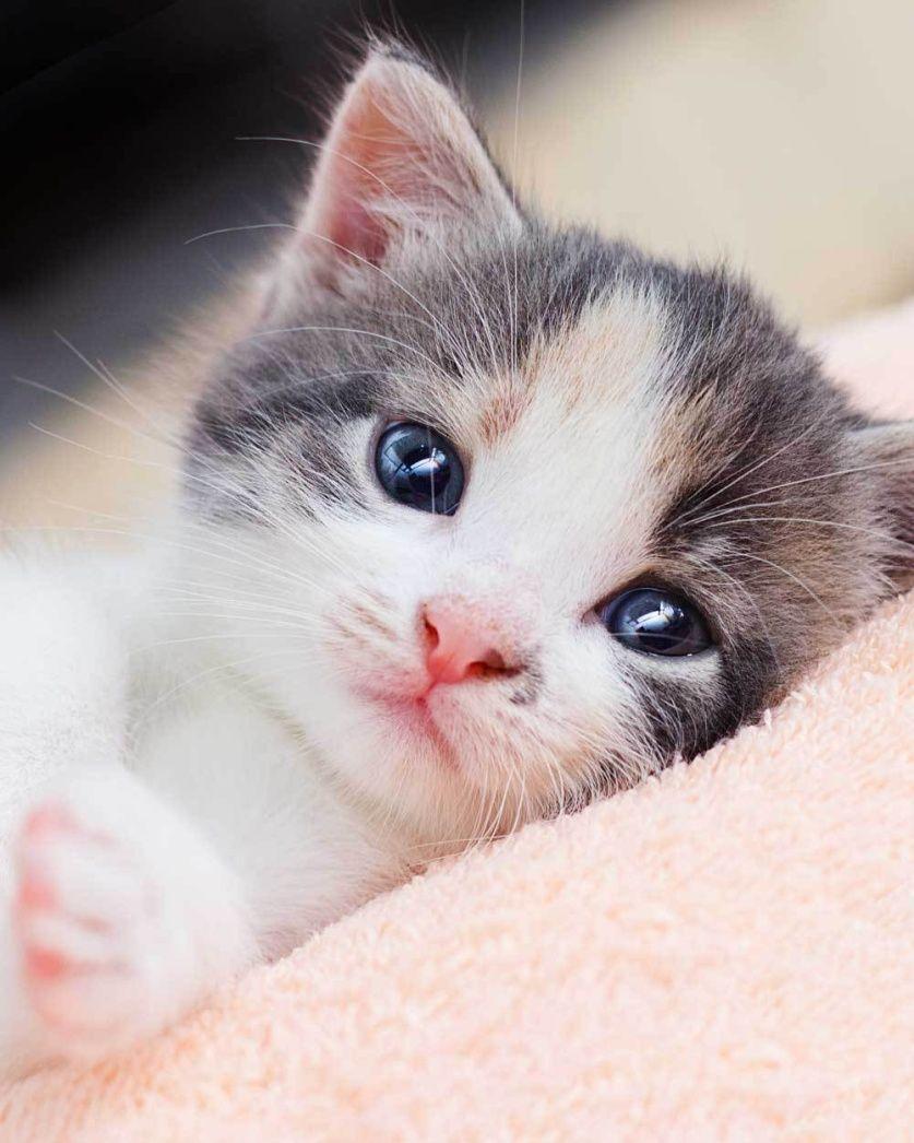 Mikroflanelová dětská deka Koťátko Jerry Fabrics
