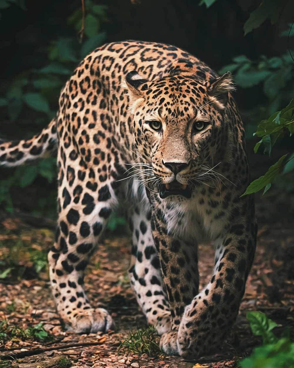 Mikroflanelová dětská deka Leopard green Jerry Fabrics